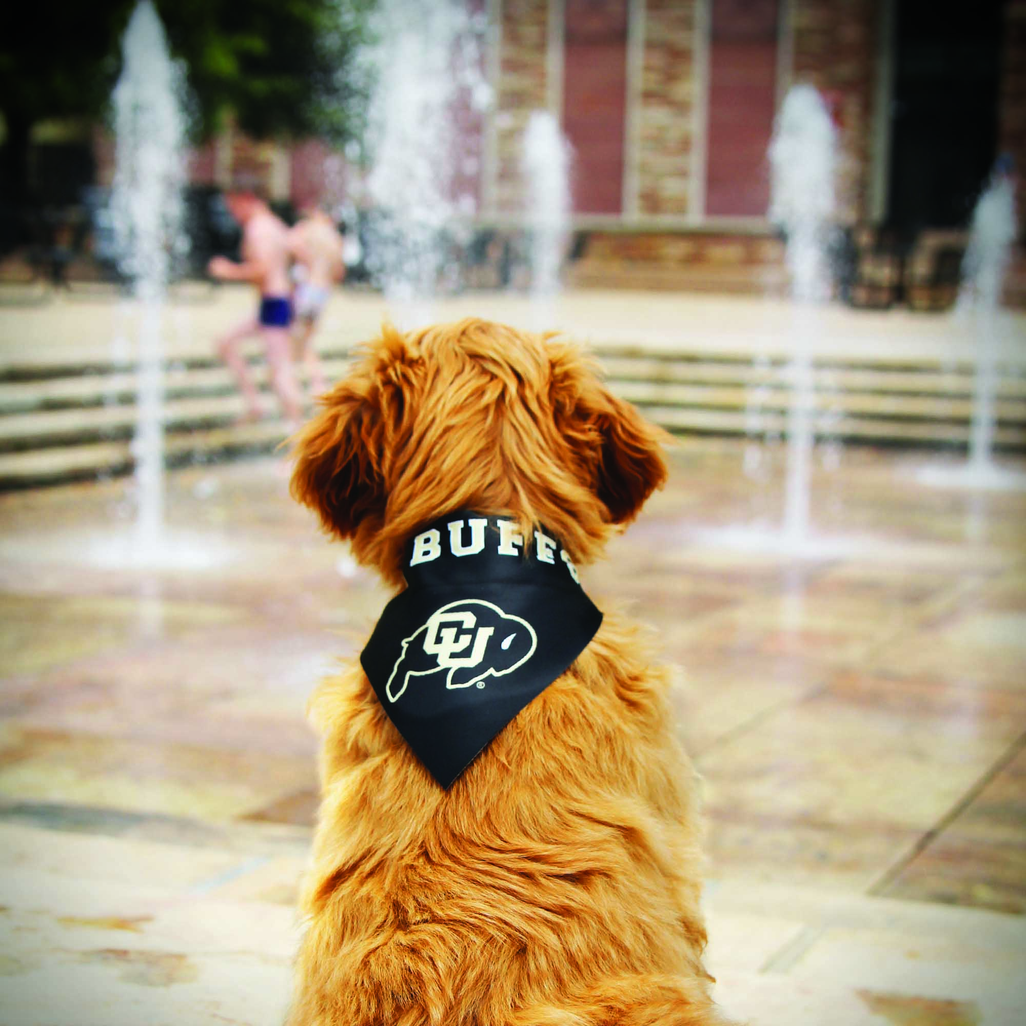 Puppy with Buffs  bandana at the UMC fountains