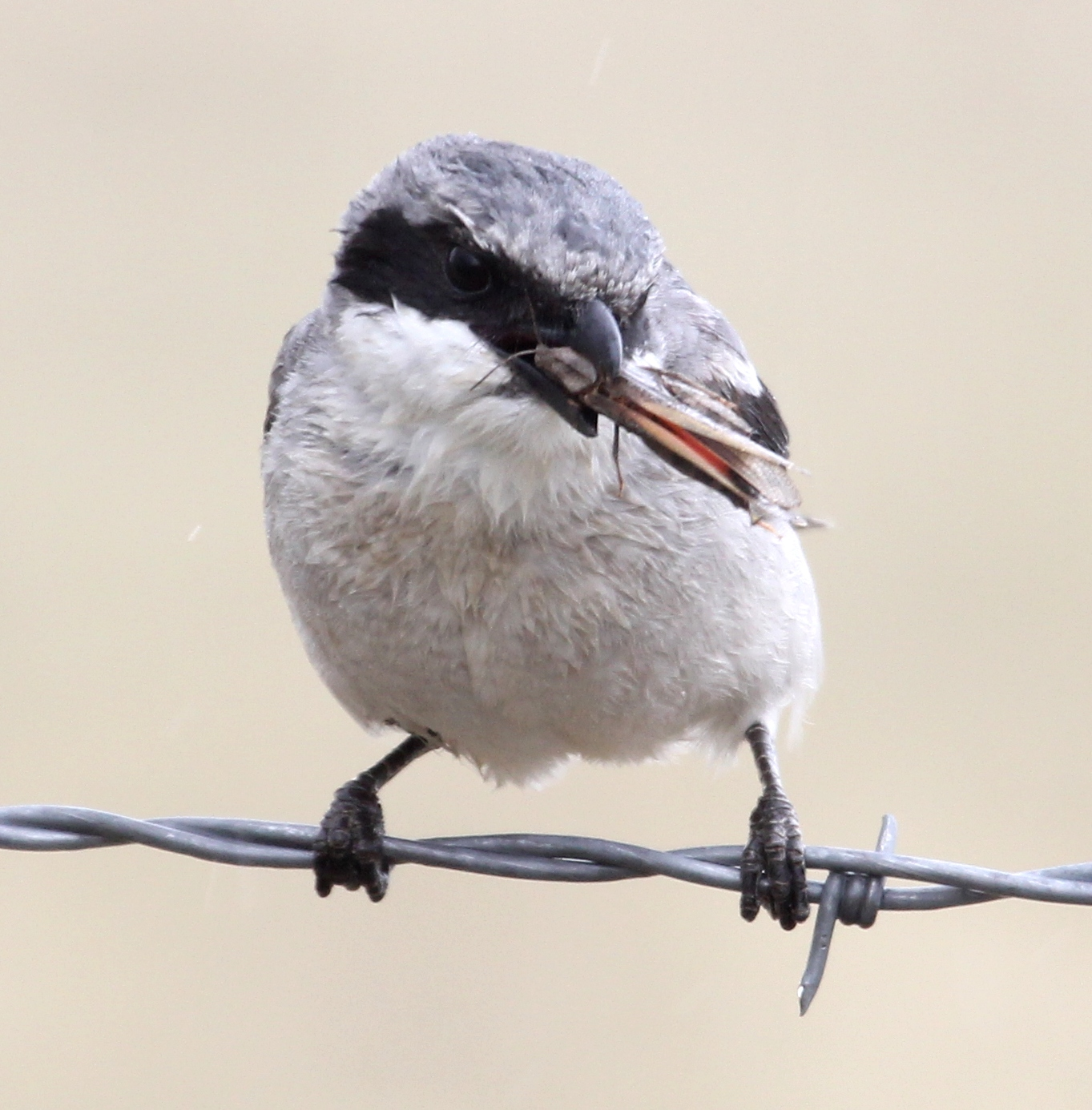Photo of Boulder-area bird